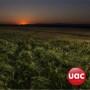 UAC Group